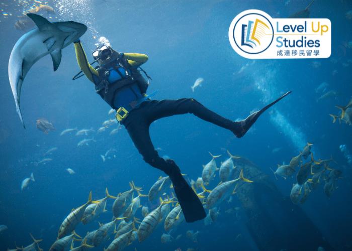 澳洲 潛水課程